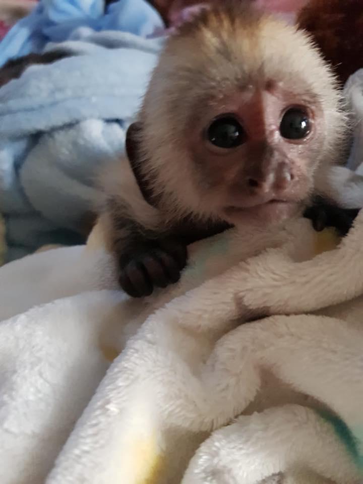 Monkeys Breeders SA